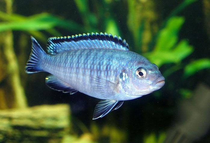 Хищные рыбы  с названиями